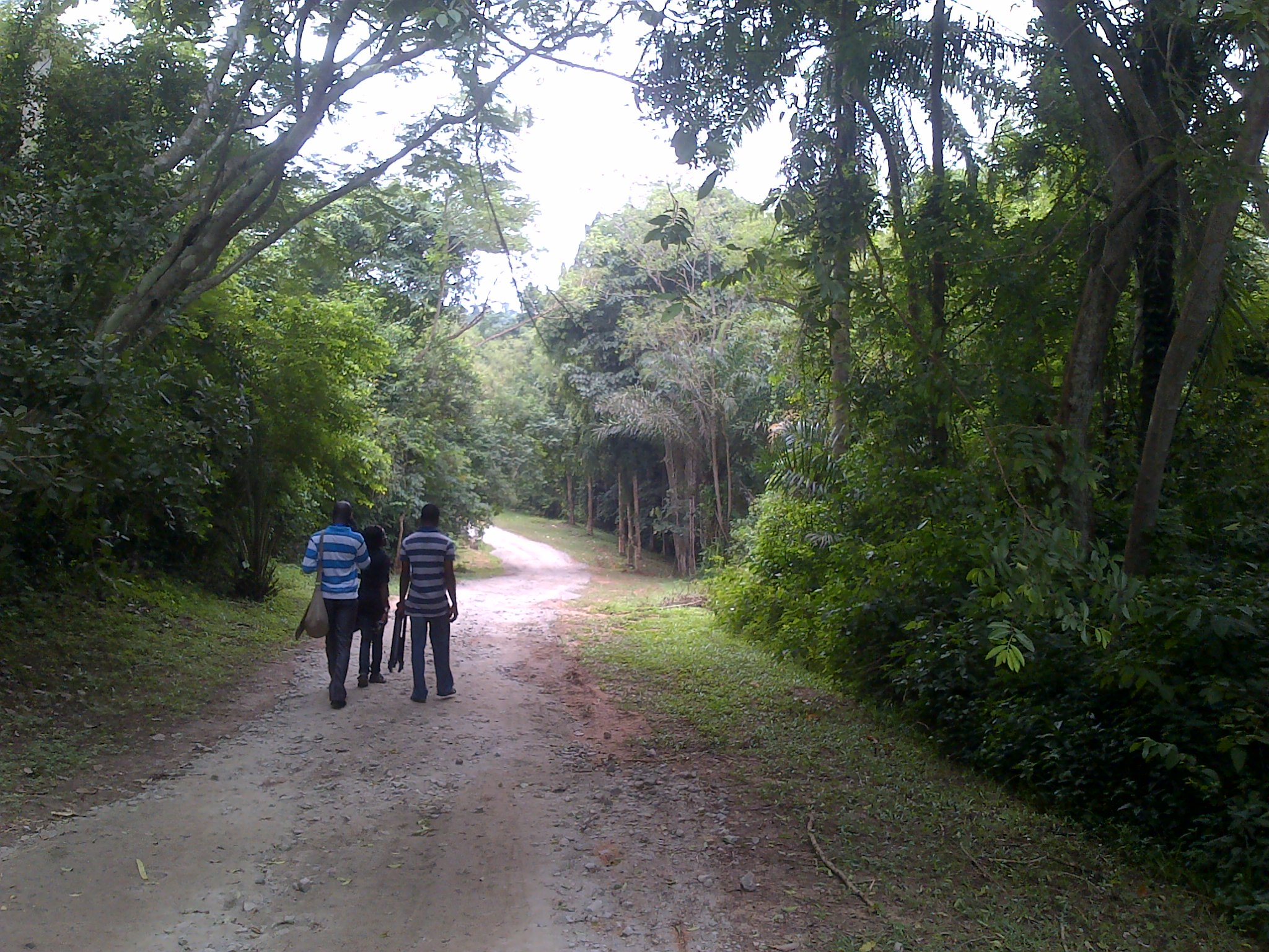 The Famous Ijegba forest